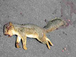 Dead Squirrel Meme - 2011 mixed meters