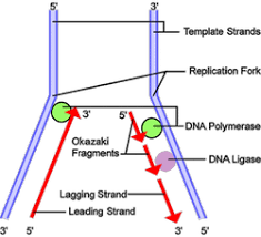 an introduction to molecular biology replication of dna and its