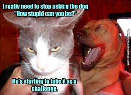 Stupid Cat Meme - the cat keeps challenging the dog fun cat pictures