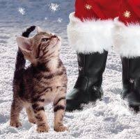 alex clark charity christmas cards cats u0026 dogs by the aga pack of