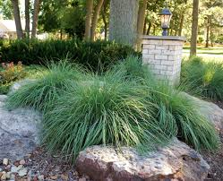 Rock Garden Cground Garden Fancy Ideas To Avoid Tired Of Lawn Care Using Ground Cover