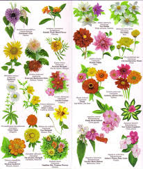 flowers chart with names in english 195410 1 jpg vintage charts