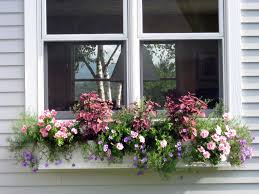 Window Box For Herbs Exploring Variegated Plants For Containers