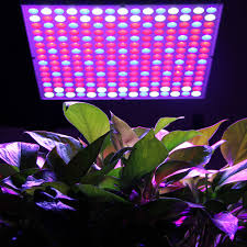 plants that don t need light 100 indoor flowering plants that don t need sunlight little