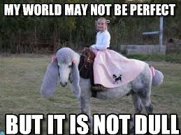 World Of Memes - my world may not be perfect jacqueline meme on memegen