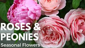 Peonies Flower Seasonal Cut Flowers Garden Rose And Peony Flower Arrangement