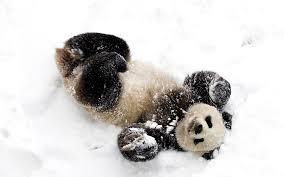panda snow fun wallpaper 1920x1200 13925