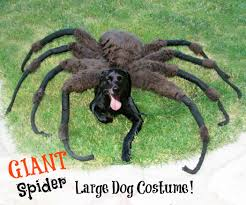 giant spider dog costume 7 steps with pictures