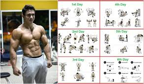 8 weeks workout program for beginners gym workout chart
