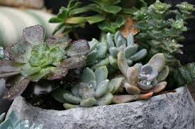Indoor Plants That Don T Need Sunlight by Vignette Design Succulents In Winter