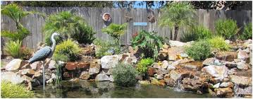 backyards compact landscape design for yards and gardens san