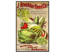 antique seed catalog print 1896 5