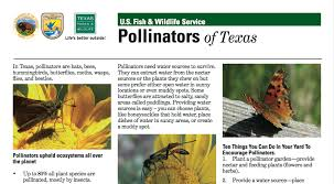 pollinators of native plants monarch butterfly and other insect pollinators texas nature