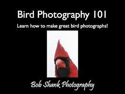 backyard bob shank photography