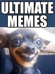 Cheesy Memes - memes ultimate memes jokes 2018 cheesy doggy funniest memes