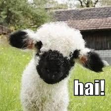 Alpaca Sheep Meme - hello animal capshunz funny animals animal captions