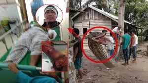 vidio film ular anaconda begini nasib robert nababan yang diserang ular anaconda netizen