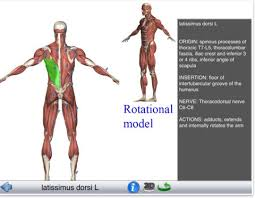 Interactive 3d Anatomy 7 Wonderful Ipad Apps To Learn About Human Body In 3d