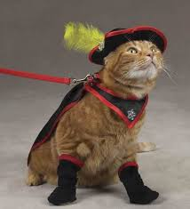 Halloween Costumes Cats 269 Cats Costume 2 Images Animals Cats