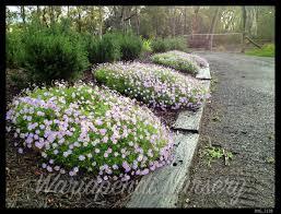 australian native plant nursery sydney designing gardens with native plants providing professional