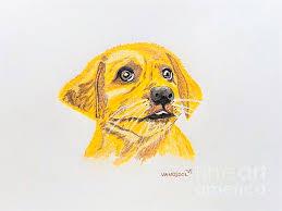 draw golden retriever puppy 100 images golden retriever