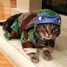 Cat Halloween Costumes Cats 25 Cat Costumes Ideas Cute Cat Costumes