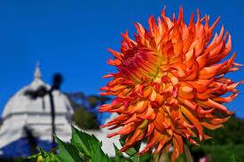 San Francisco Flower Garden by Conservatory San Francisco Citizen