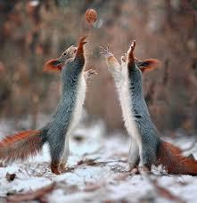 Squirrel Meme - i can has cheezburger squirrel funny animals online cheezburger