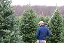 evergreens chuck hafner u0027s garden center syracuse