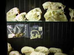 paxton gate s bizarre menagerie of skulls oddities and raccoon how would you describe paxton gate