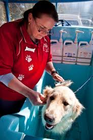 aussie pooch mobile dog wash u0026 grooming franchise ph 1300 369 369