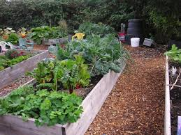 Ideas For School Gardens School Garden That Bloomin Garden Page 4