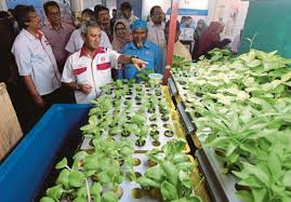 agriculture projects for students dispelling myths about agricultural studies