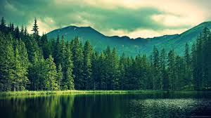 wallpaper trees facebook cover with green mountains india hd high