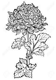 japanese chrysanthemum stock photos royalty free japanese