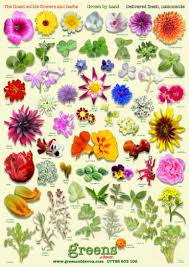 edible flowers identify edible flowers guide to edible flowers greens of