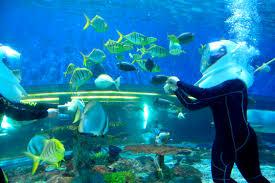 aquanaut voyage glimpse of the ocean wonders manila ocean park