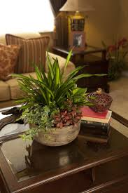 9 best indoor gardens images on pinterest exotic houseplants