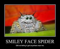 Image 325848 Misunderstood Spider Know - funny spider meme 28 images daddy s girl killed her first spider