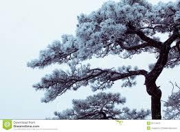 winter huangshan freezing tree stock photo image 26774010