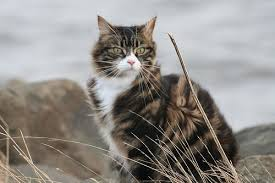 Barn Cat Names View Topic Rushing Hearts Cat Rp Now Accepting Chicken