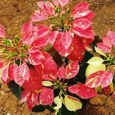 plants guru home facebook