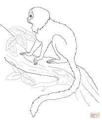 tamarin monkey coloring page free printable coloring pages