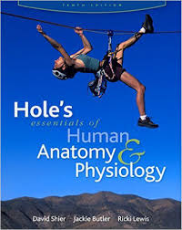holes human anatomy 13th edition images human anatomy image