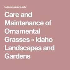 ornamental grasses cutting back rhs gardening ornamental