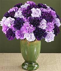 purple carnations three dozen purple carnations giftshopdubai flower shop