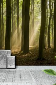 Wall Mural Forest Sunrise Wall 11 Best Forest Images On Pinterest Wallpaper Designs Forests