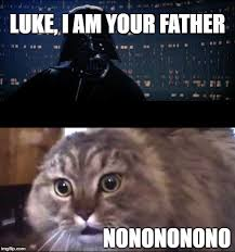 Star Wars Cat Meme - star wars nonono imgflip