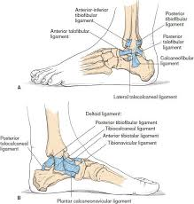 Anterior Distal Tibiofibular Ligament Ankle And Foot Injuries Anesthesia Key