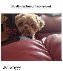 Whyyy Meme - no dinner tonight sorry bud but whyyy meme on me me